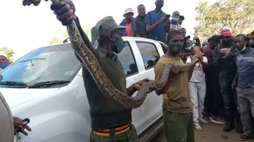 Man runs away after seeing huge snake