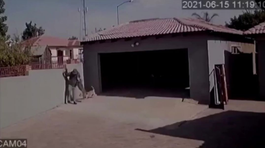 Burglar gets attacked by dogs